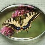 Butterfly Photographic Glas..